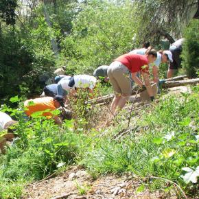 habitat restoration small