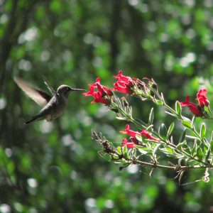 #hummingbird walk at the #EnvironmentalNatureCenter is 2:7:15- register at encenter.org