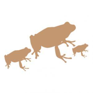 frog-gam1square