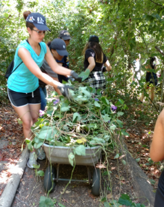 Volunteers from UCI remove invasive, non-native morning glory from the ENC.
