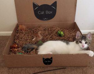 Cat Box Boutique