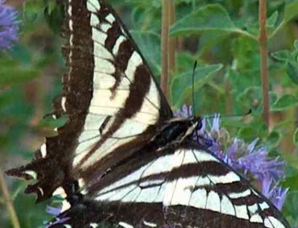 Butterfly House Docent Training coming soon!