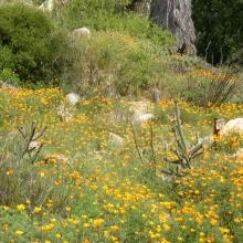 Desert in bloom.
