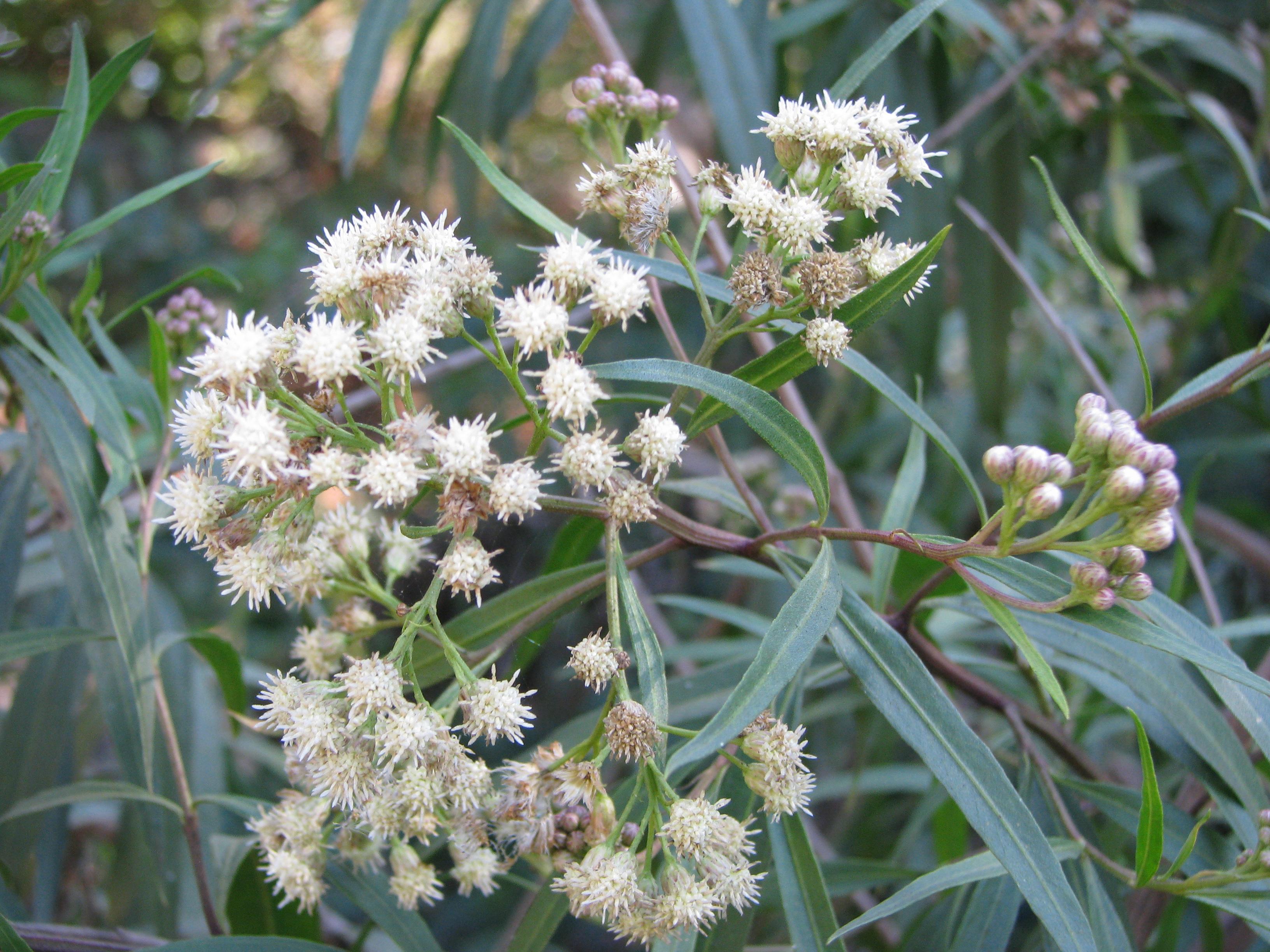 Plant Communities Environmental Nature Center