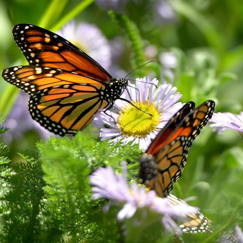 Butterfly House | Environmental Nature Center