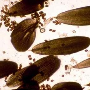 Spores-&-scales