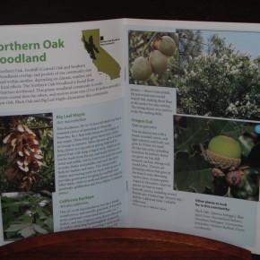 plant communities guide #2