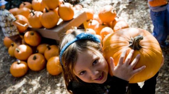 Pumpkin Fall Faire